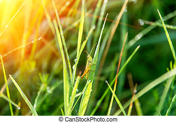 Grasshopper in the grass