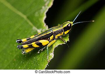 Macro of a colorful grasshopper sitting on leaf.