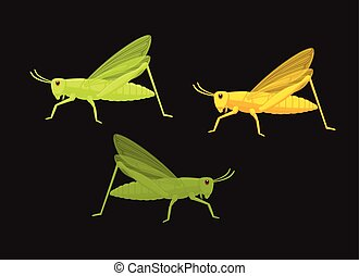 Grasshoppers Insects Vector Illustration