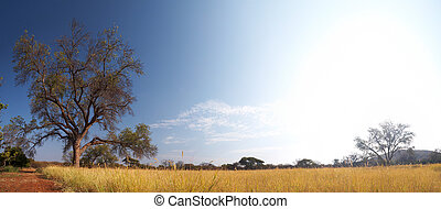 Blue sky and tree on the horizon of a typical winter African grassland Savannah - Stitched Panorama
