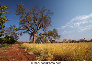 Grassland African savannah - Blue sky and tree on the ...