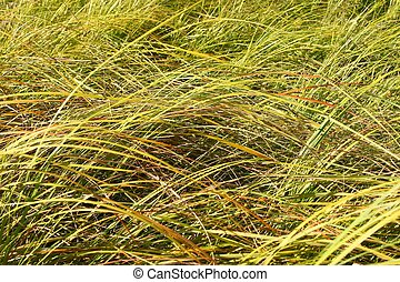 Grassland Background - Illinois
