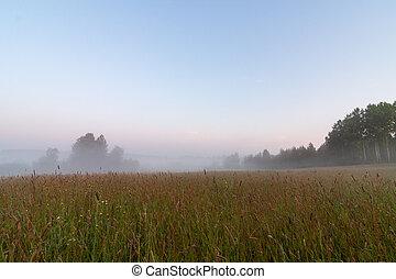 Grassland field at foggy morning sunrise