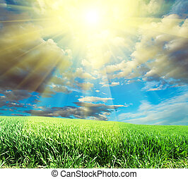 Grassland - grassland
