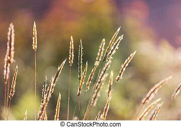 Grassland - Green grassland in summer season
