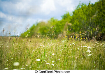 Image of bright green grassland with blue sky above