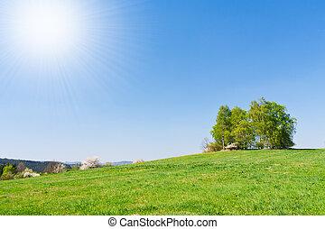 grassland in the springtime - green farmland in the ...