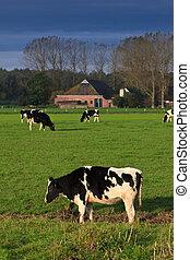 grassland, krowy, krajobraz