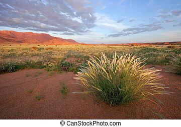 Grassland landscape at sunrise, Brandberg mountain, Namibia