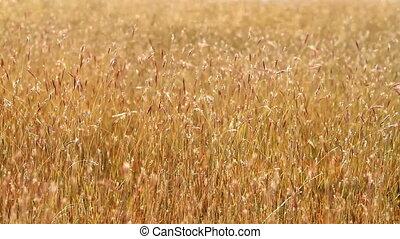 Grassland - Nice grass field