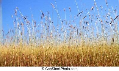Grassland - Nice grassy field