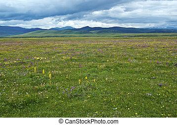 Grassland pastures