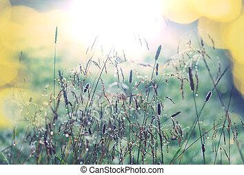 Grassland - Green grassland