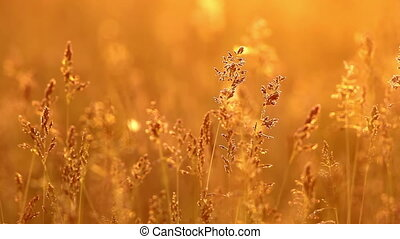 Grassland - Grass landscape in the wonderful sunset light