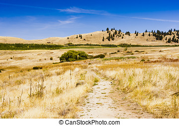 Grassland trail under blue sky