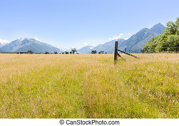Golden summer grassland valley and surrounding Southern Alps on clear blue sky day, New Zealand.
