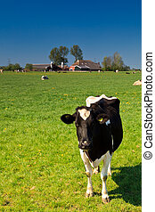 Countryside with grassland, cows and farm