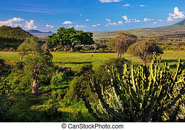 Grassland with rich flora, savanna and bush landscape in Africa. Tsavo West, Kenya.
