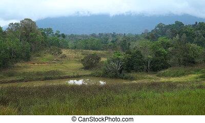 Grasslands at Khao Yai National Park. - Video of grasslands...