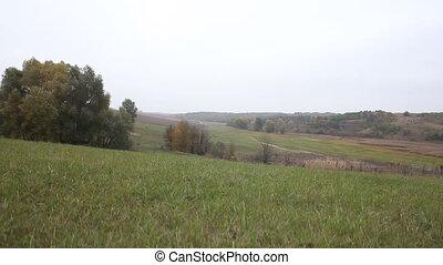 grasslands dirt road trees and a pond