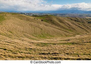 grasslands in New Zealand