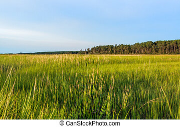 Grasslands of the Eastern Shore of Virginia
