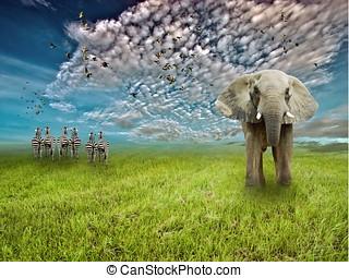 grasslands with wildlife