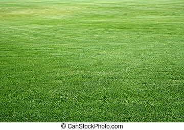 big space covered of young green grass like carpet