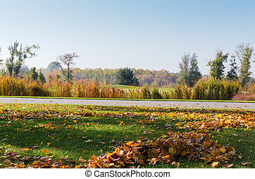 Grassplot covered with grass and fallen leaves against autumn forest