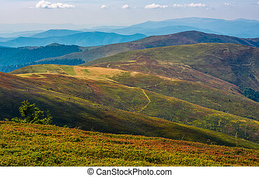 alpine meadows over the flat mountain ridge - grassy alpine...