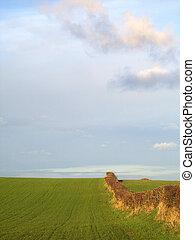 Grassy Field And Sky 2