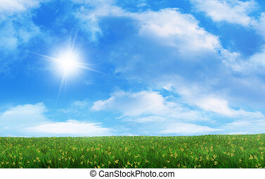 Bright sunlight on a grassy field on a summer day