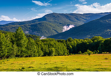 grassy field in front of a forested hills. lovely nature...