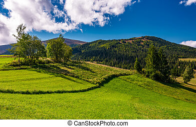 grassy field in mountainous rural area. beautiful...