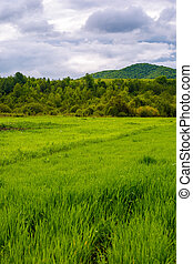 grassy field near the forest in mountains. lovely rural...