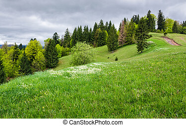 grassy field on a forested hill. lovely nature scenery on an...