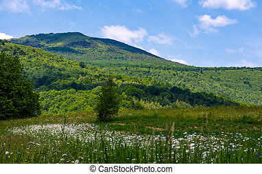 grassy field with daisies on hillside. beautiful summer...