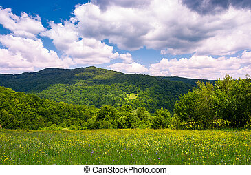 grassy field with wild herbs in mountain. beautiful summer...
