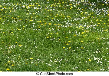 grassy field with wildflower