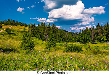 grassy fields and spruce forest in summer. lovely...