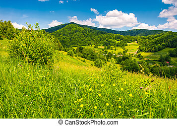 grassy fields in mountainous rural area. lovely rural...