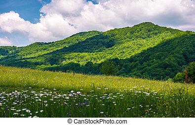 grassy fields in mountainous rural area. lovely rural...