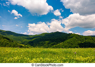 grassy fields with wild herbs in mountains. beautiful summer...