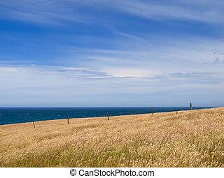 Grassy hill background