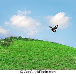 Grassy Hill With Butterfly