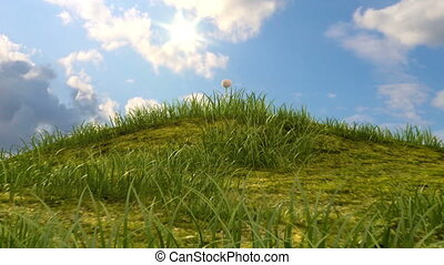 grassy hill with chamomile and ladybird against the ...