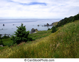 Grassy hillside and fog bank - View from a green grassy...