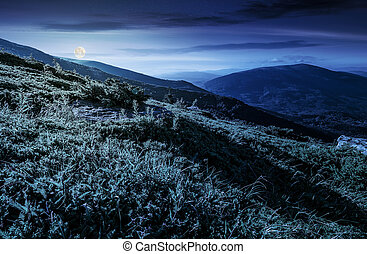 grassy hillside in Carpathian mountains at night