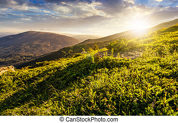 grassy hillside in Carpathian mountains at sunset