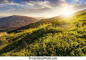 grassy hillside in Carpathian mountains at sunset - grassy...